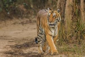 जिम कॉर्बेट राष्ट्रीय उद्यान Corbett National Park, Uttarakhand
