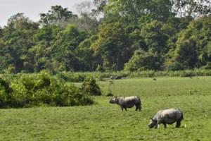काजीरंगा राष्ट्रीय उद्यान Kaziranga National Park