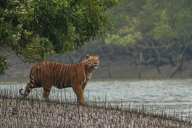 सुंदरबन नेशनल पार्क Sundarban National Park