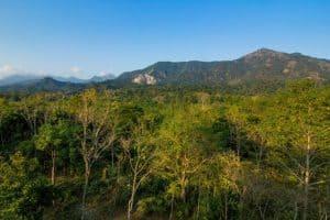 बुक्सा टाइगर रिज़र्व Buxa Tiger Reserve