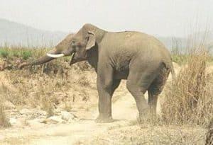दाचीगाम राष्ट्रीय उद्यान Dachigam National Park