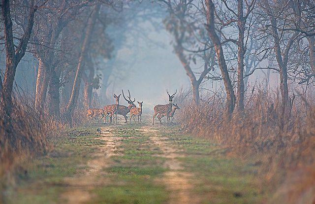 दुधवा राष्ट्रीय उद्यान Dudhwa National Park