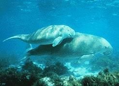 समुद्री राष्ट्रीय उद्यान, मन्नार की खाड़ी Gulf of Mannar Marine National Park