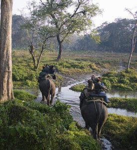 जलदापाड़ा राष्ट्रीय उद्यान Jaldapara National Park