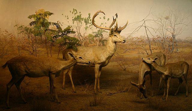 केयबुल लामजाओ राष्ट्रीय उद्यान Keibul Lamjao National Park