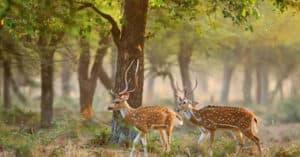 माधव राष्ट्रीय उद्यान Madhav National Park