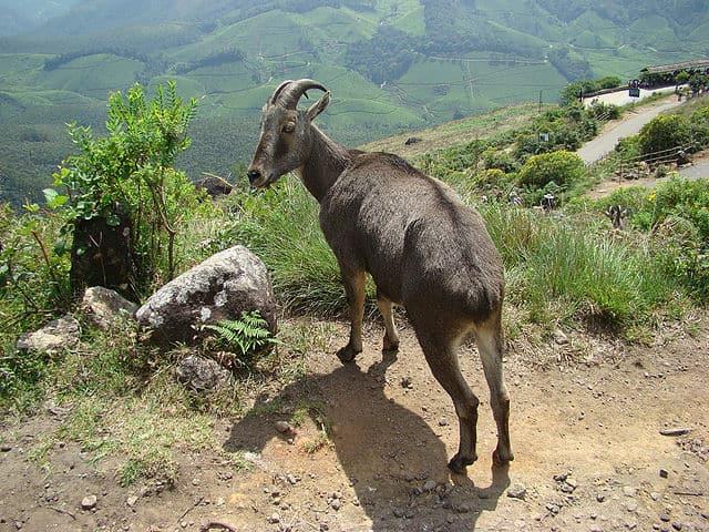 मथिकेत्तन शोला राष्ट्रीय उद्यान Mathikettan Shola National Park