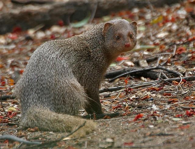 मृगवनी राष्ट्रीय उद्यान Mrugavani National Park