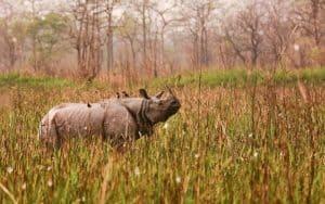ओरांग राष्ट्रीय उद्यान Orang National Park