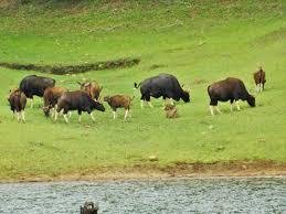 राजबारी नेशनल पार्क Rajbari National Park
