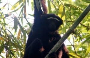 सिरोई राष्ट्रीय उद्यान Sirohi National Park
