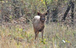 ताडोबा राष्ट्रीय उद्यान Tadoba Andhari Tiger Reserve
