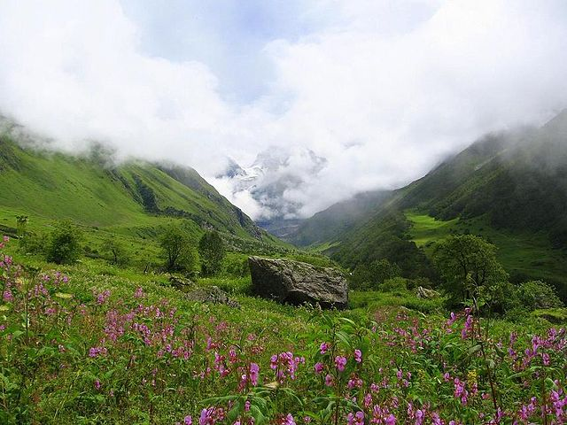 फूलों की घाटी राष्ट्रीय उद्यान Valley of Flowers National Park