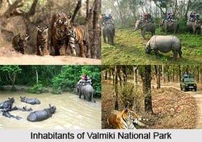 वाल्मीकि राष्ट्रीय उद्यान Valmiki National Park
