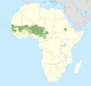 फ़ुला भाषा Fula language