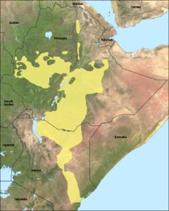 ओरोमो Oromo language